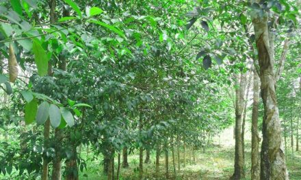 Pohon Gaharu – Ciri, Manfaat, Jenis dan Budidaya