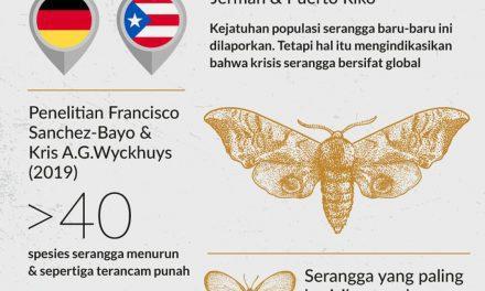 Infografis – Serangga Terancam Punah