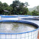 Bioflok - Sistem Budidaya Perikanan Lele & Nila