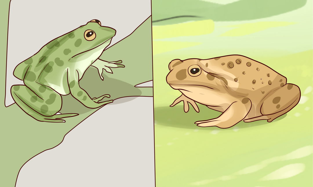 perbedaan katak dan kodok