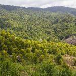 Taman Nasional Bogani Nani Wartabone - Sulawesi