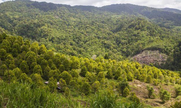 Taman Nasional Bogani Nani Wartabone – Sulawesi