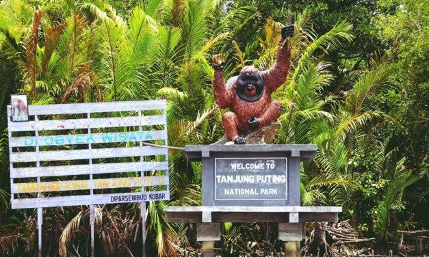 Taman Nasional Tanjung Puting – Habitat Konservasi Orangutan