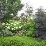 Mengenal Tanaman Perdu serta Perbedaan Dengan Herba dan Pohon