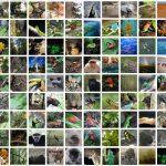 Daftar Tumbuhan & Hewan yang Dilindungi di Indonesia (Terlengkap)