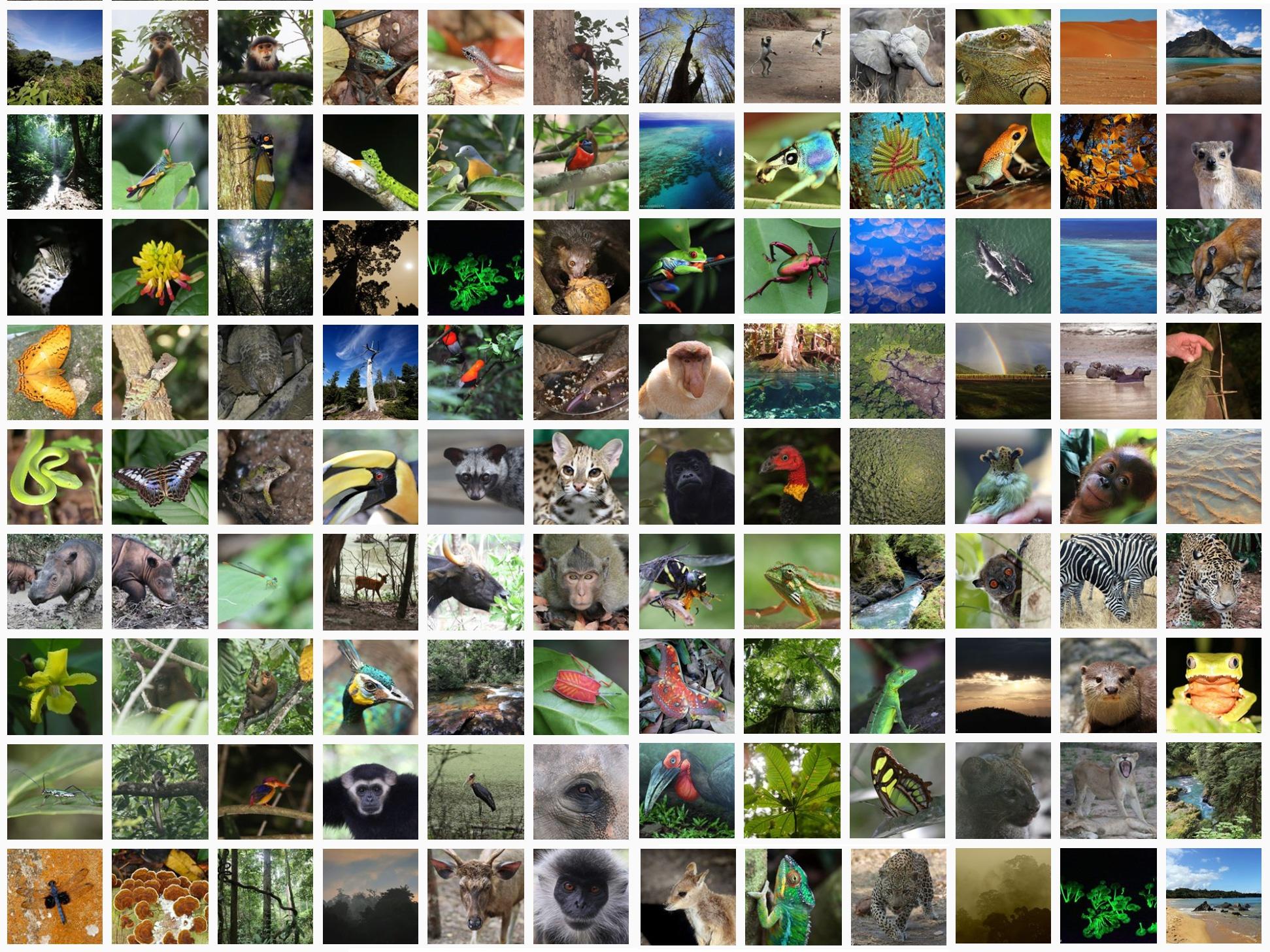 8300 Gambar Hewan Hewan Yang Dilindungi HD