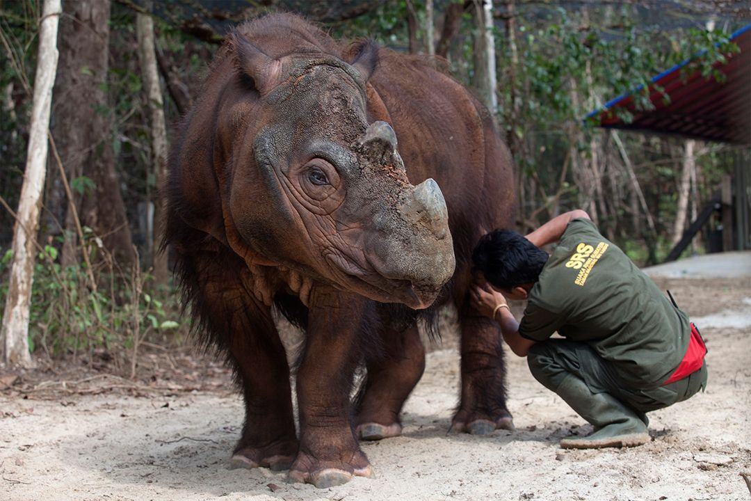 Sumatran Rhino Sanctuary