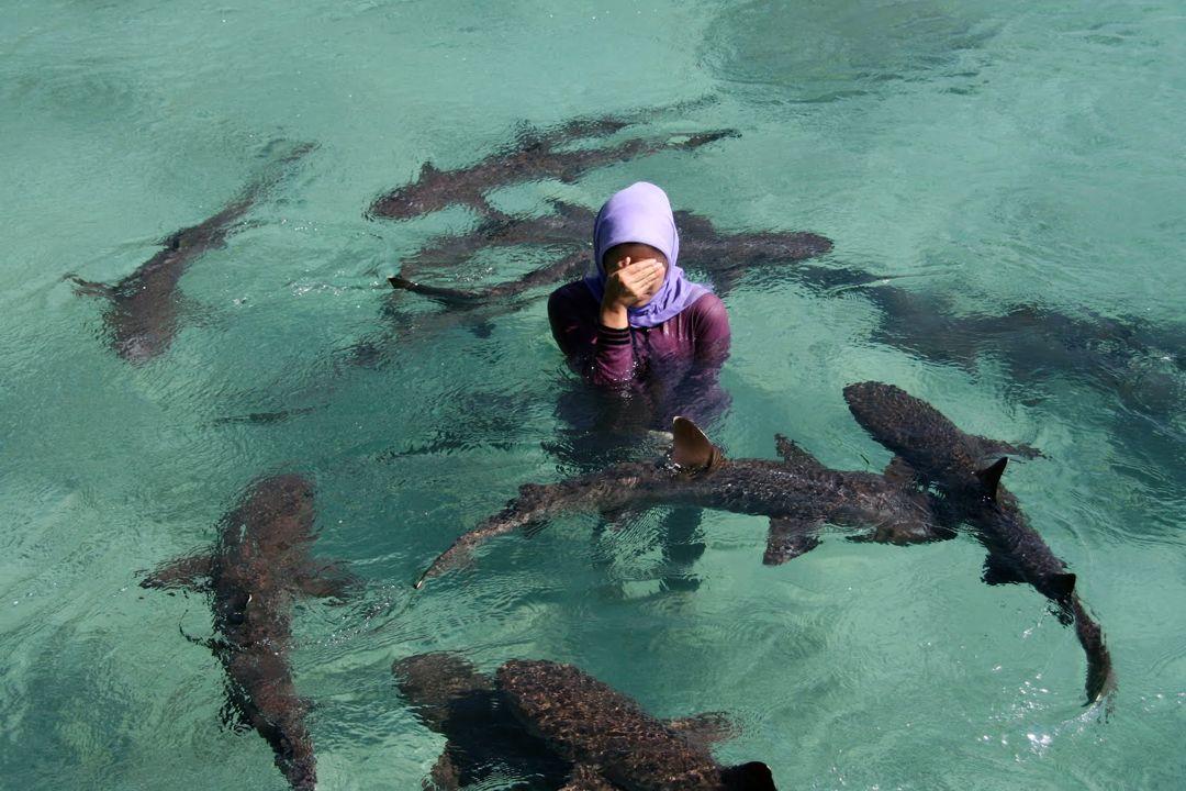 berenang dengan hiu