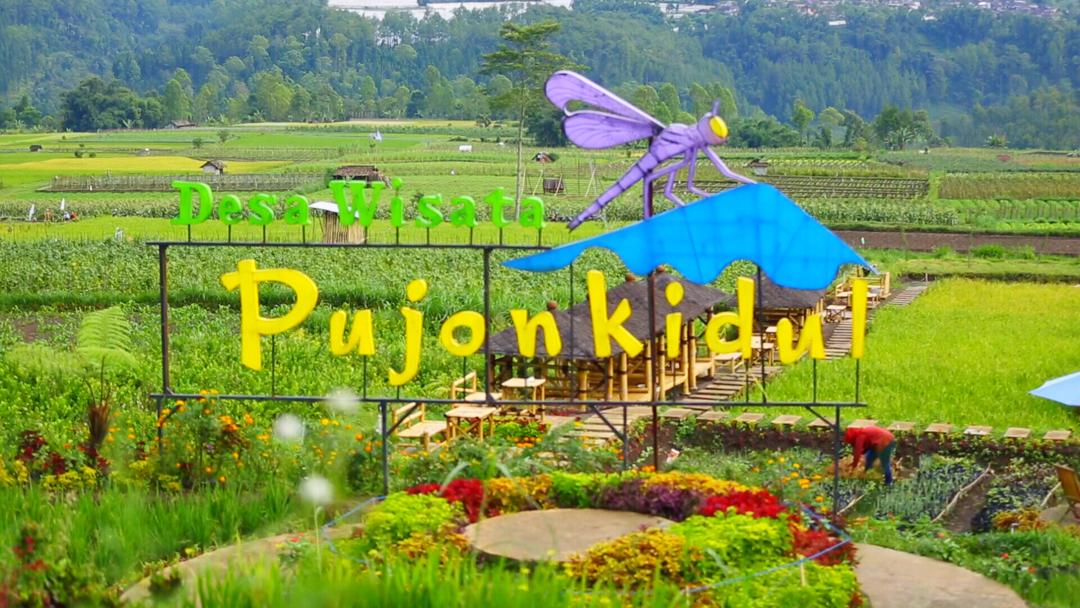 Desa Wisata Pujon Kidul Keseruan Agrowisata Malang