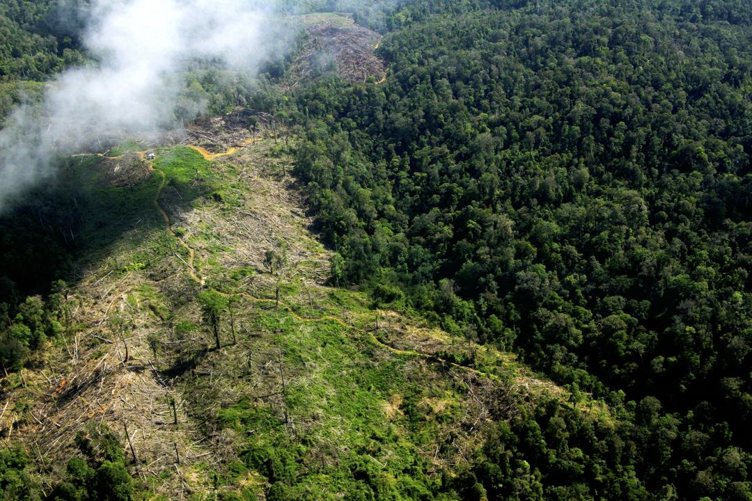 hutan gunung leuser