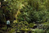 hutan kerinci seblat