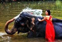 mandi bersama gajah
