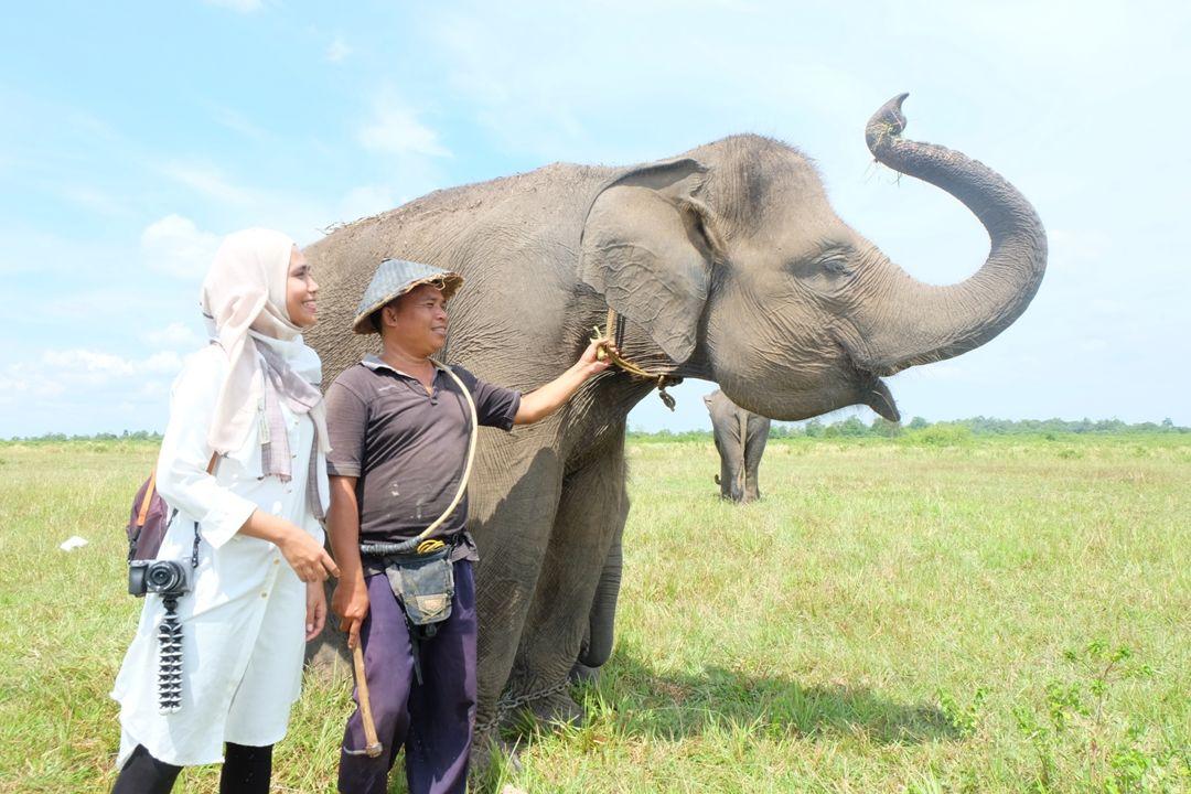 pawang gajah