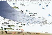 rantai makanan di laut