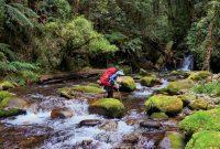 taman nasional gandang dewata