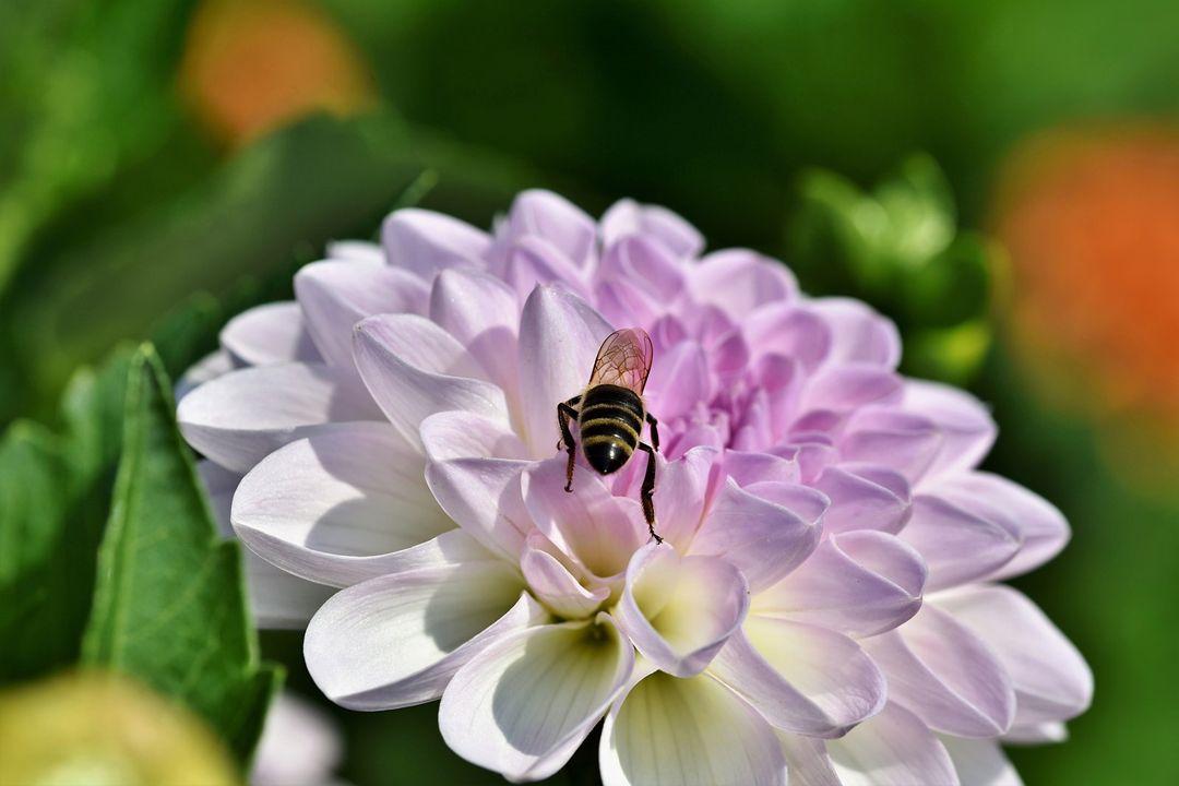 bunga dan lebah