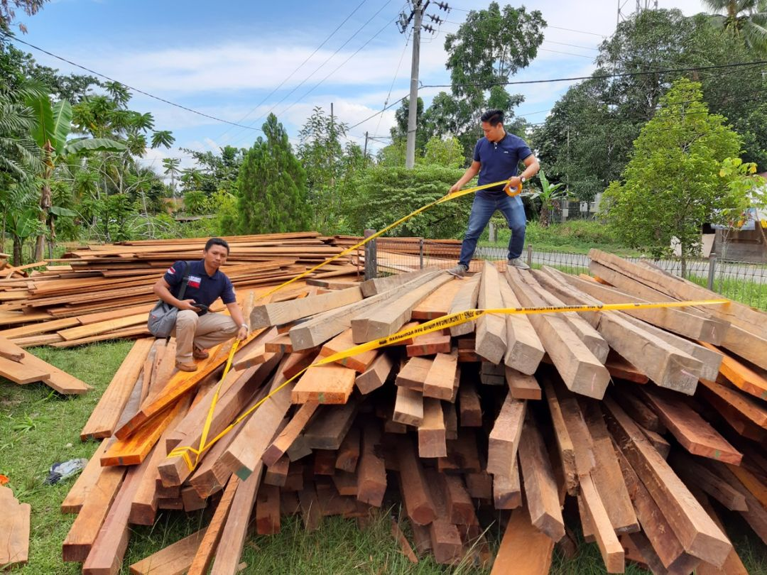 penyitaan kayu ilegal