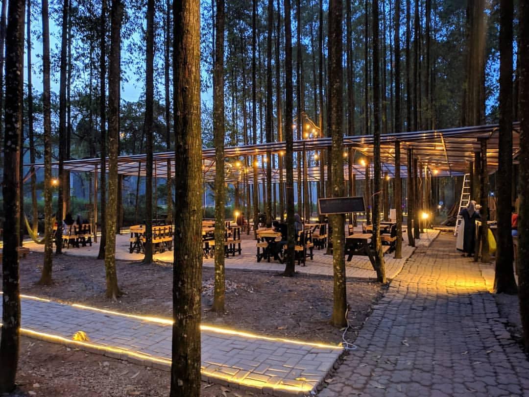 wisata hutan kertas