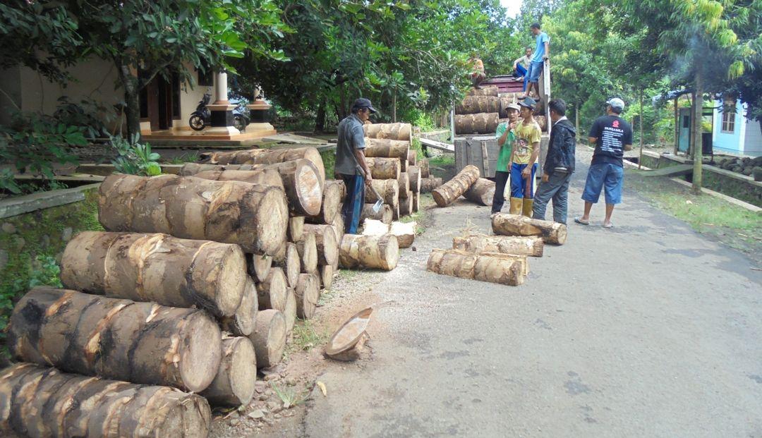 kayu aren