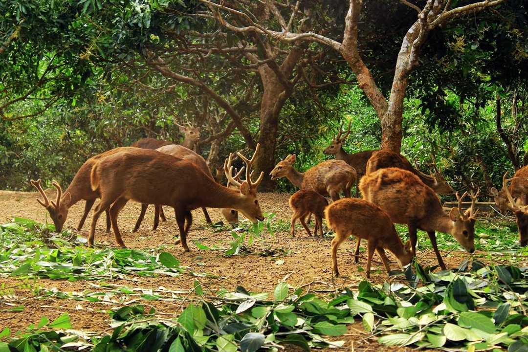 rusa endemik bawean