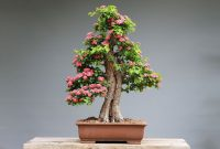 tumbuhan bonsai