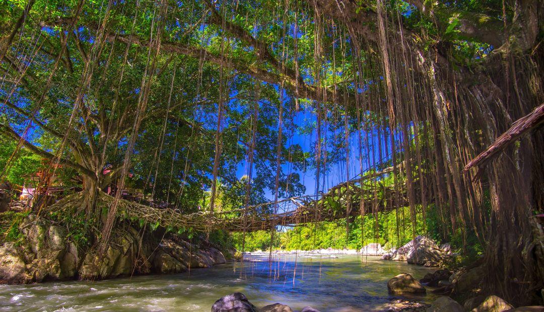 jembatan akar sumatera barat