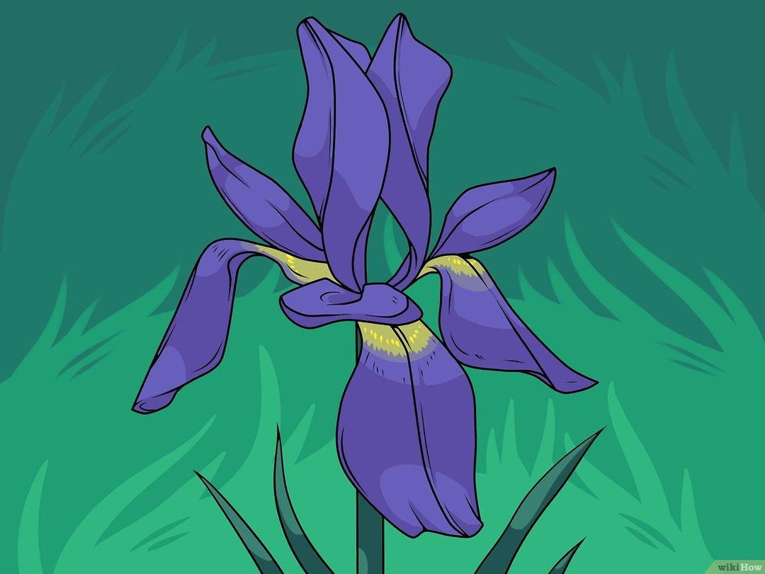 gambar mewarnai bunga lili