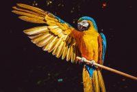 ternak burung
