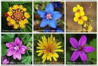 aneka jenis gambar bunga