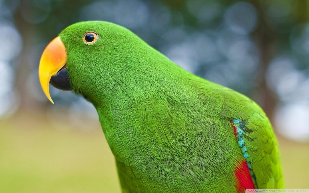 Burung Nuri Habitat Ciri Jenis Keunikan Dan Makanan